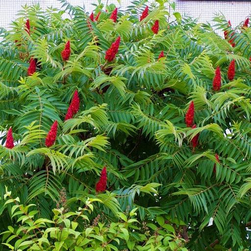 Как растут декоративные растения